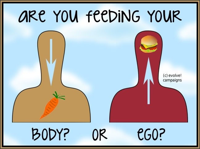 A cosa stai dando da mangiare?