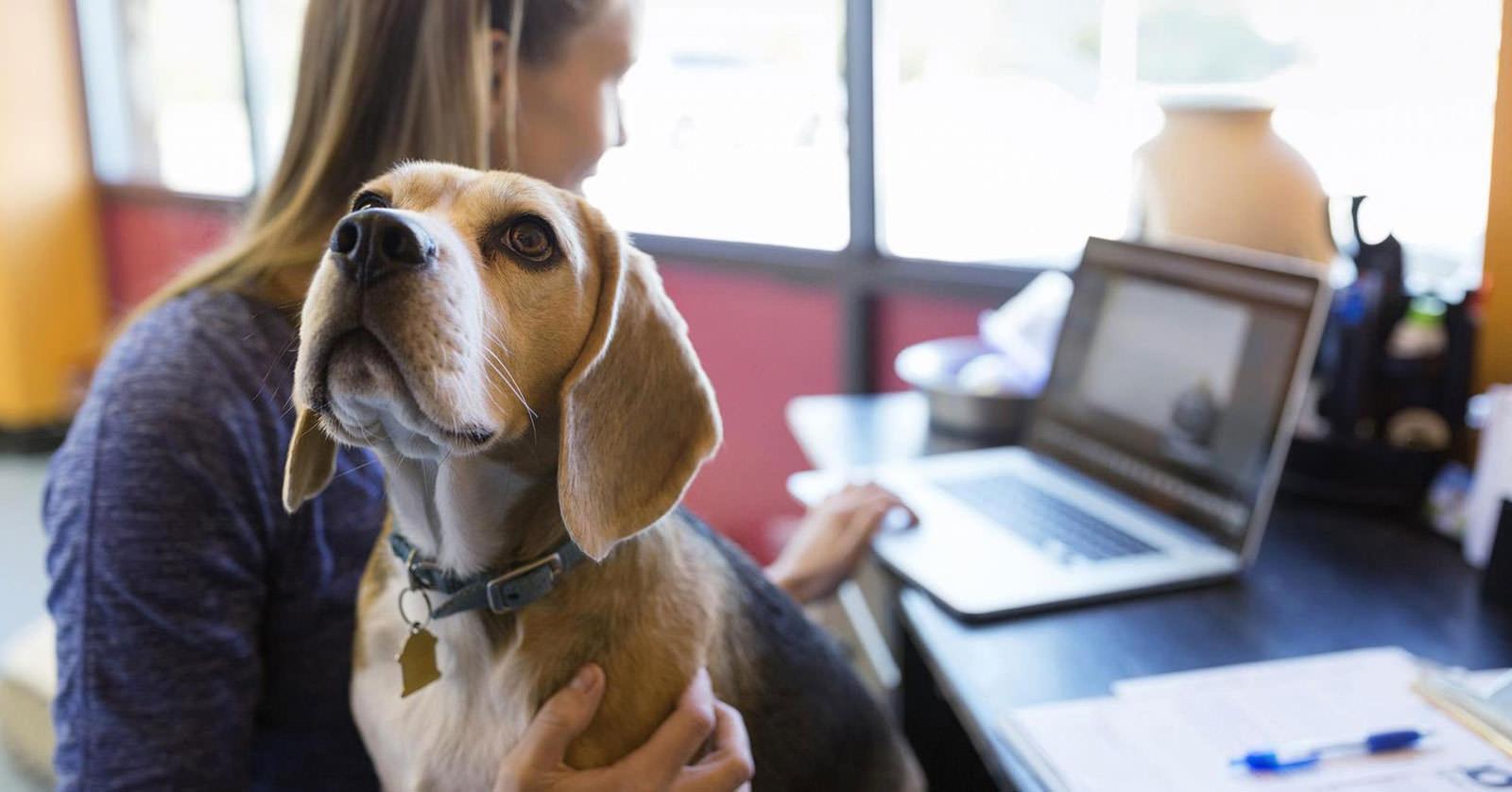 I vantaggi di avere un cane sul posto di lavoro: guida per aziende e dipendenti